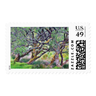 Glengesh Pass In Ireland Old Tree Postage Stamps
