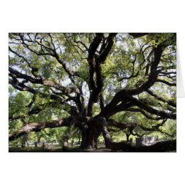 glenwood live oak card