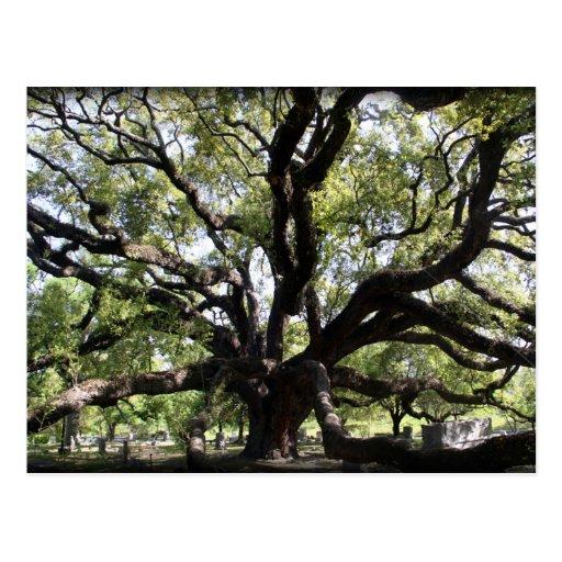 glenwood live oak postcards