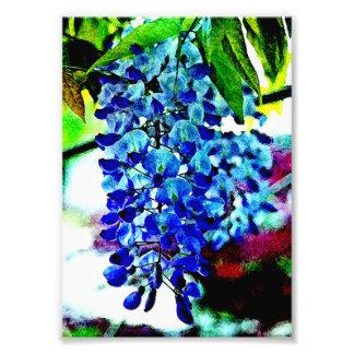 Glicinias azules impresión fotográfica