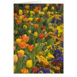 Glicinias y tulipanes en el jardín de Dumbarton Felicitación