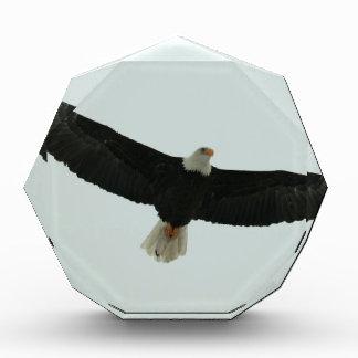 Gliding bald eagle acrylic award