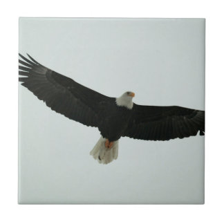 Gliding bald eagle ceramic tile