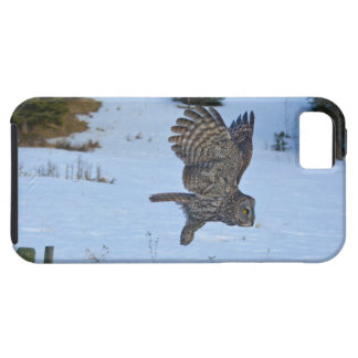Gliding Great Grey Owl and Snow Wildlife Raptor iPhone 5 Cover