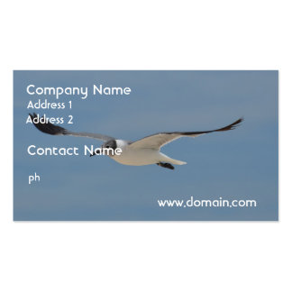 Gliding Laughing Gull Business Card