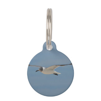 Gliding Laughing Gull Pet Name Tag