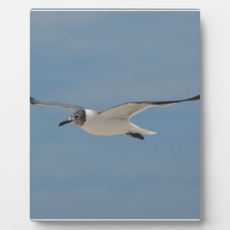 Gliding Laughing Gull Plaque