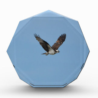 Gliding Osprey Acrylic Award