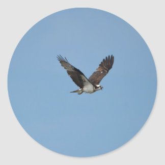 Gliding Osprey Classic Round Sticker