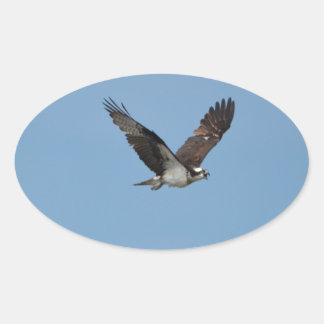 Gliding Osprey Oval Sticker