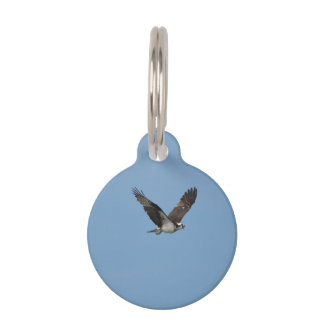 Gliding Osprey Pet Name Tag