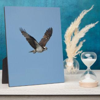 Gliding Osprey Plaque
