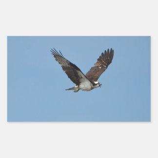 Gliding Osprey Rectangular Sticker