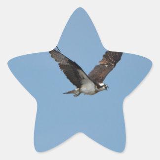 Gliding Osprey Star Sticker