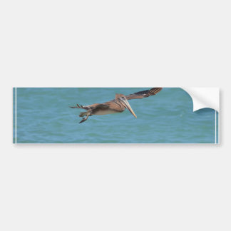 Gliding Pelican Bumper Sticker