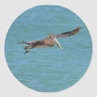 Gliding Pelican Classic Round Sticker
