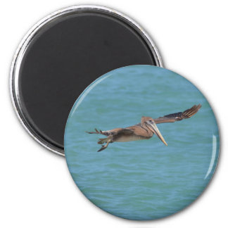 Gliding Pelican Magnet