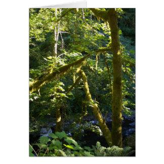 Glimpse Upstream Card