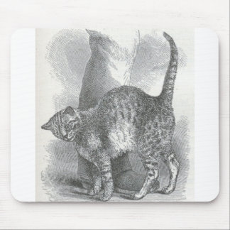 Glimpses of the Animate World - An Affectionate Ca Mousepad