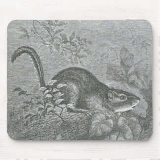 Glimpses of the Animate World - Chipmunk Mouse Pad