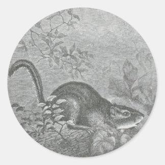 Glimpses of the Animate World - Chipmunk Classic Round Sticker