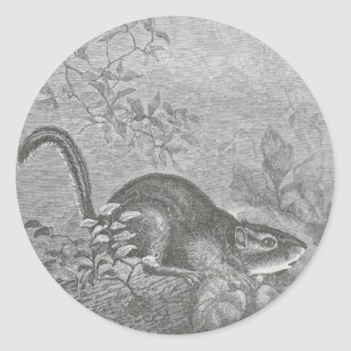 Glimpses of the Animate World - Chipmunk Classic Round Sticker