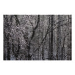 Glistening Icy Forest in Morning Light I Poster