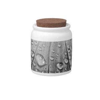 Glistening Rain Drops on Daisy Flower Candy Dish
