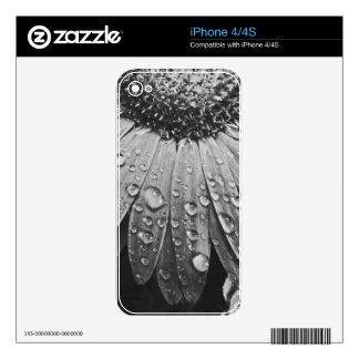 Glistening Rain Drops on Daisy Flower Decal For The iPhone 4S