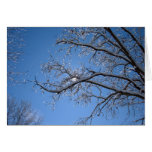 Glittering Ice and Snow Covered Trees Greeting Card