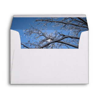 Glittering Ice and Snow Covered Trees Envelope