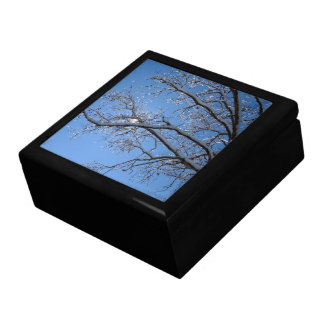Glittering Ice and Snow Covered Trees Jewelry Box