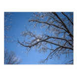Glittering Ice and Snow Covered Trees Postcards