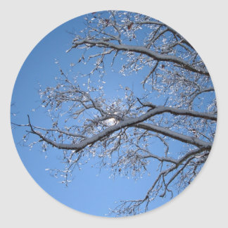 Glittering Ice and Snow Covered Trees Sticker