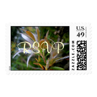 Glittering rain postage stamp