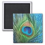 Glittery Blue Peacock Feather Still Life Refrigerator Magnet