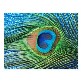 Glittery Blue Peacock Feather Still Life Postcard