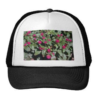 Globe Amaranth (Gomphrena Globosa) flowers Trucker Hat