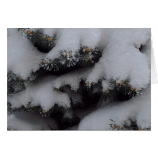 Globe blue spruce winter card