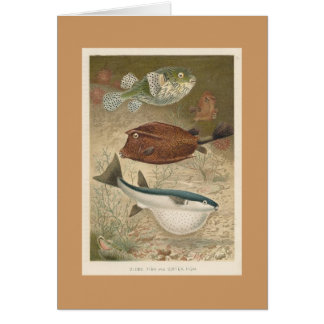 Globe Fish & Coffer Fish Card