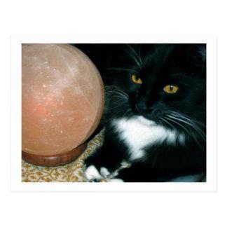 Globo y gato de la sal psíquicos - fotografía postales