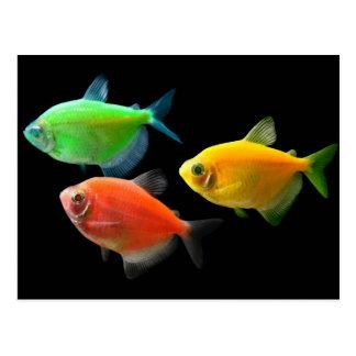 GloFish® Postcard