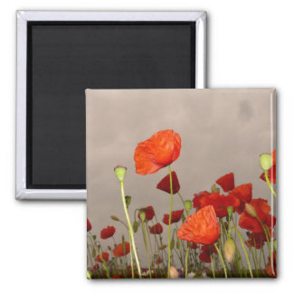 Gloomy Day Red Poppies Fridge Magnets