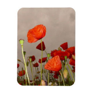 Gloomy Day Red Poppies Vinyl Magnets