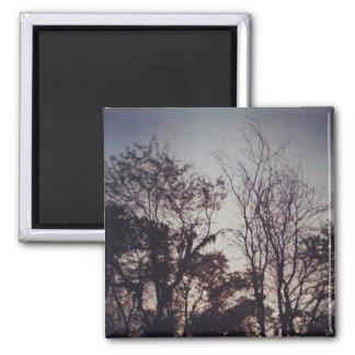 Gloomy treescape magnet