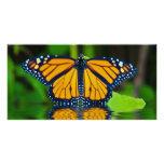 Gloria del monarca tarjeta fotografica