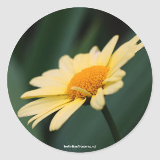 Glorious Daisy Flower Photo Sticker Label