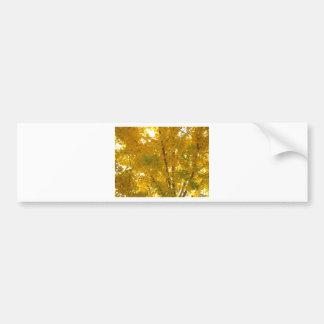 Glorious Gingko Bumper Sticker