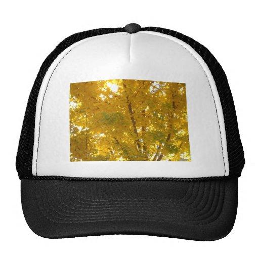 Glorious Gingko Trucker Hats