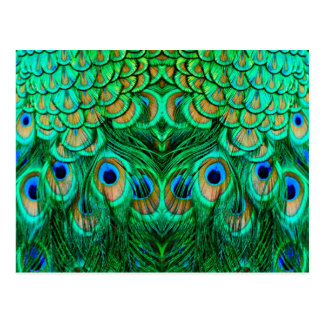 Glorious Peacock Feathers Postcard
